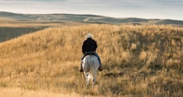 Rancher on horse in a field